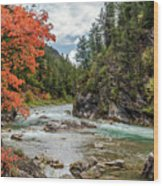 Blazing Red Mountain Maple, Greys River Wood Print