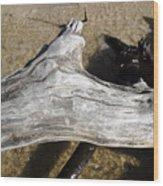 Bleached Driftwood Wood Print