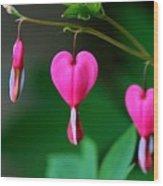 Bleeding Heart 2 Wood Print
