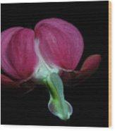 Bleeding Heart 2011-8 Wood Print