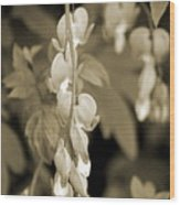 Bleeding Hearts In Sepia Wood Print
