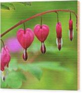 Bleeding Hearts - Lamprocapnos-spectabilis Wood Print