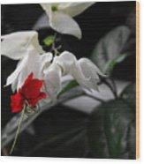 Bleeding Heartwine Flower Wood Print