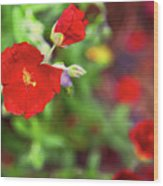Bleeding Spring 3 Wood Print