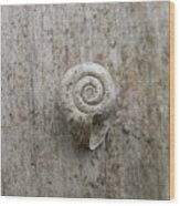 Blended Shell Wood Print