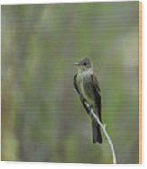 Blending In Wood Print