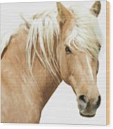 Blonde Stallion Wood Print
