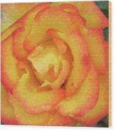 Blood Orange Rose Wood Print