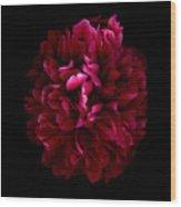 Blood Red Peony Wood Print