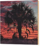 Blood Red Sunset Palm Wood Print