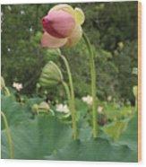 Bloom Among The Pods Wood Print