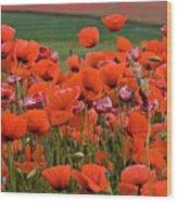 Bloom Red Poppy Field Wood Print
