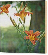 Bloom Where You're Planted Wood Print