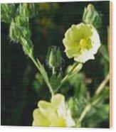 Bloomin Happy 1 Wood Print