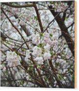 Blooming Apple Blossoms Wood Print by Eva Thomas