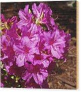 Blooming Azaleas Wood Print