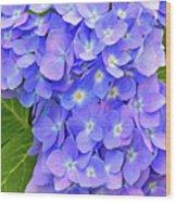 Blooming Blue Hydrangea Wood Print