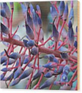 Blooming Bromeliads Collage Wood Print