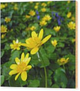Blooming Buttercups. Wood Print