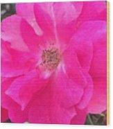 Blooming Wood Print