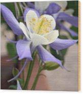 Blooming Columbine Wood Print