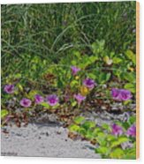 Blooming Cross Vines Along The Beach Wood Print