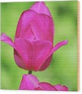 Blooming Dark Pink Tulip Flower Blossom In A Garden Wood Print