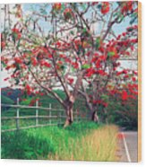Blooming Flamboyan Trees Along A Country Road Wood Print