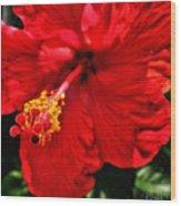 Blooming Flower 2 Wood Print