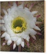 Blooming Hedgehog Cactus Wood Print