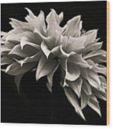 Blooming II Wood Print
