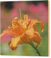 Blooming In August Wood Print