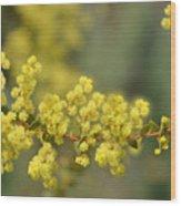 Blooming In Yellow Wood Print