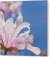 Blooming Magnolia Flower Wood Print