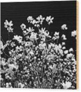 Blooming Magnolia Tree Wood Print