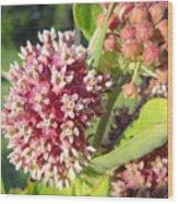 Blooming Milkweed Flowers Wood Print