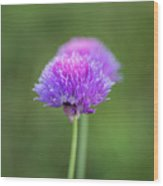 Blooming Onion Chives Wood Print