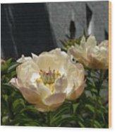 Blooming Peonies Wood Print