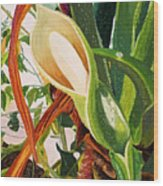 Blooming Philodendron Tree After Rain Wood Print