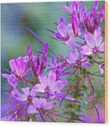 Blooming Phlox Wood Print