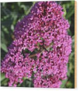 Blooming Pink Phlox Flowers In A Spring Garden Wood Print