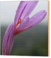 Blooming Purple Flower Wood Print