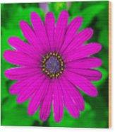 Blooming Purple Wood Print
