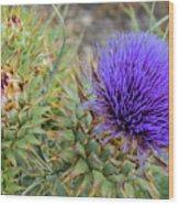 Blooming Purple Teasel Wood Print