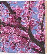 Blooming Red Buds Wood Print