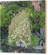 Blooming Succulent Plant. Amazing Wood Print