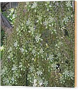 Blooming Succulent Plant. Big And Beautiful Wood Print