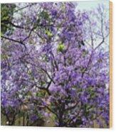 Blooming Tree With Purple Flowers Wood Print