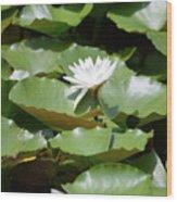 Blooming Waterlily  Wood Print