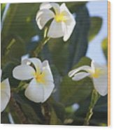 Blooms In Paradise Wood Print